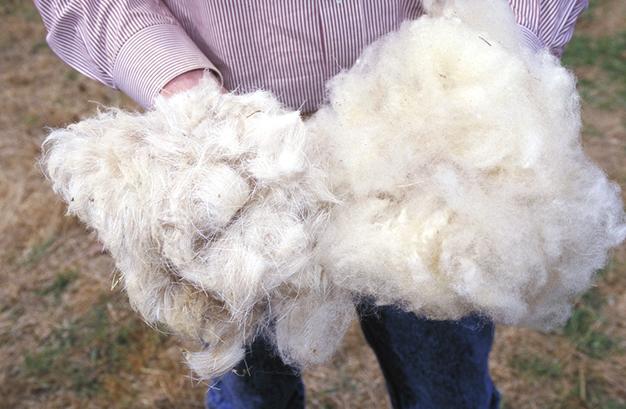 Wolle des Schafes